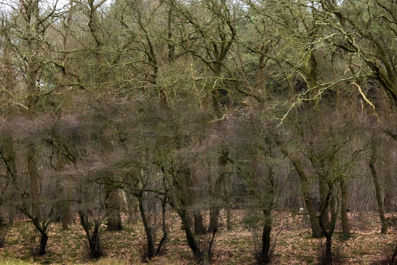 Pien van den Bosch - Bomen
